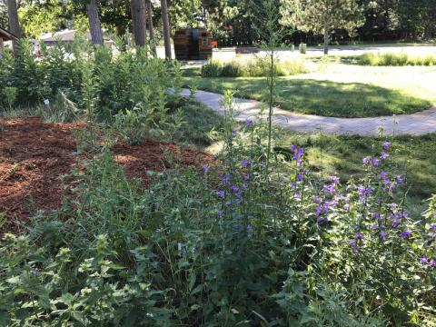Another view of the Foraging garden.